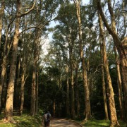 2014-08-03_Tall_Trees