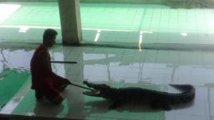 Prodding the croc