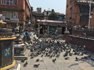Spot a pigeon - Durbar square