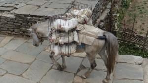 Express mule