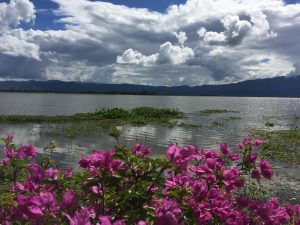 Phayao Lake. Love the colors